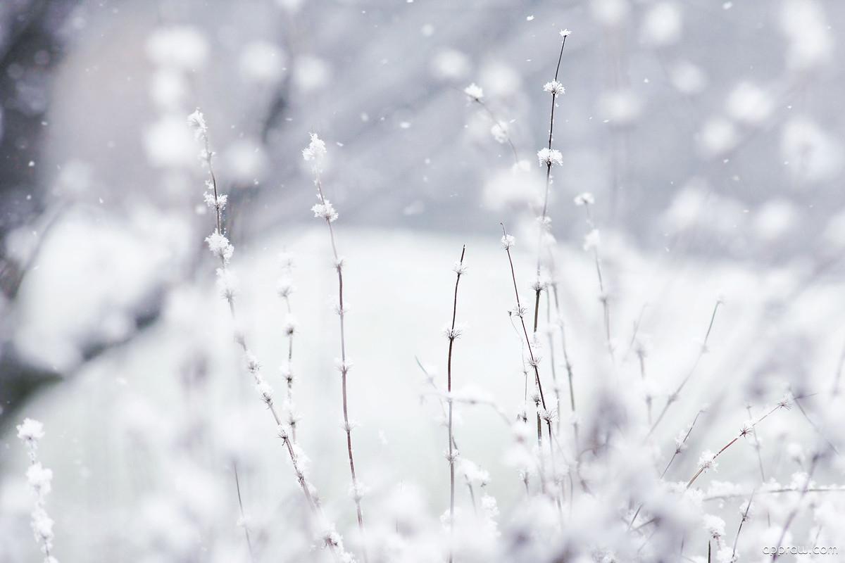 winter flowers wallpaper download - winter hd wallpaper - appraw