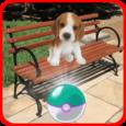 Pocket Puppy Pet Go! Icon