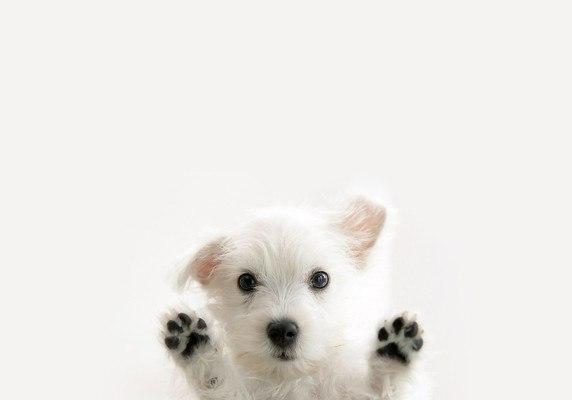 Cute Dog Paws