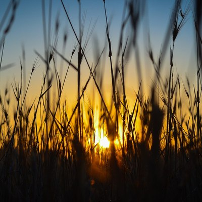 Sunset Crops