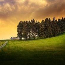 Hillside Trees