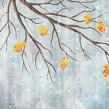 Autumn Branches with Rain Drops