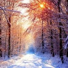 Morning Winter Wood