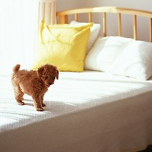 Cute Dog On Bed