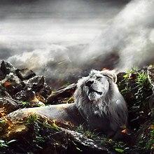 Lion Fantasy