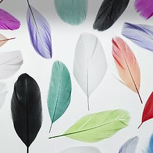 Feathers (LG Optimus)