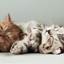 Two Cute Kittens Sleeping