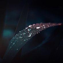 Dark Leaf Water Drops