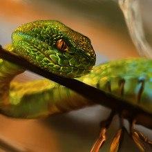 Green Snake Art