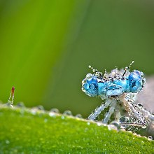 Wet Insect Macro