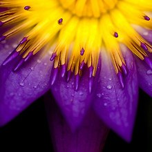 Purple & Yellow Flower