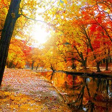 Autumn Tree Lined River