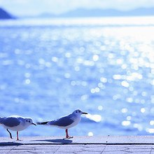 Seaside Seagulls