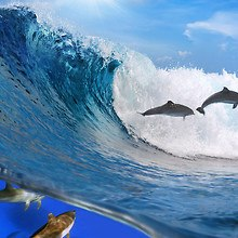 Dolphins Swimming With Waves