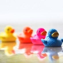Colorful Ducks