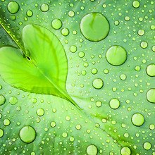 Love Heart Water Droplet