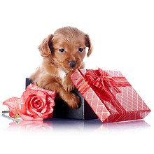 Puppy Gifts