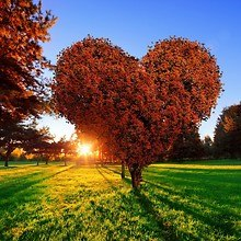 Heart Shaped Tree In Autumn