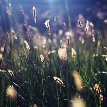 Grass In Summer