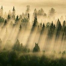 Morning Fog Over Trees