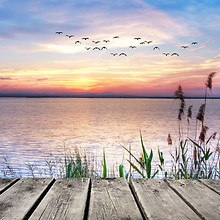 Birds Flying Over Lake