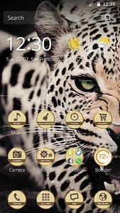 crazy leopard theme