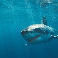 Shark Waters
