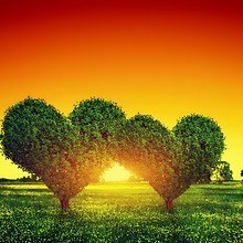Two Heart Shaped Trees
