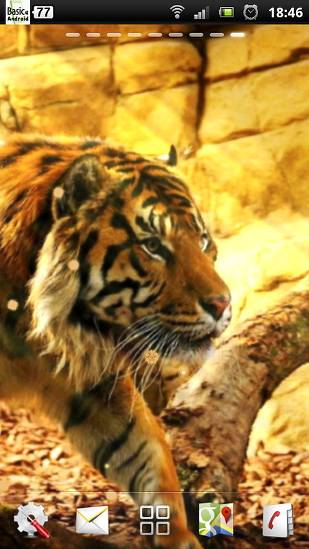 free live tiger wallpaper free android live wallpaper