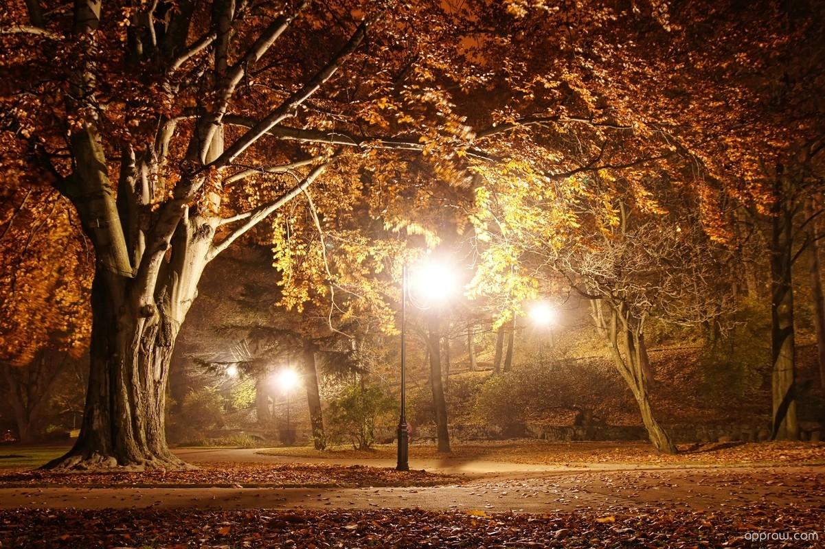autumn leaves live wallpaper hd apk