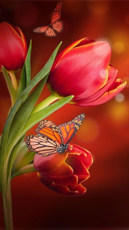 Flowers Live Wallpaper Free Android Live Wallpaper Download Appraw