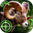 Wild Hunter 3D Icon