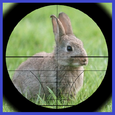 Rabbit Hunter Icon