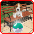 Pocket Puppy Pet Go! Icon