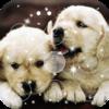 Cute Puppy Lock Screen Icon