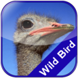 Jungle Bird Matching for Kids Icon