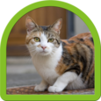 Cat Puzzle - Best For Kids Icon