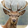 Deer Hunter: 3D Sniper Shooter Icon