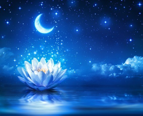 Magical Water Lily