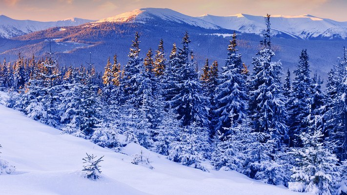 French Alps Forest