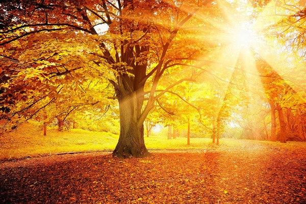 Autumn Sun Glow