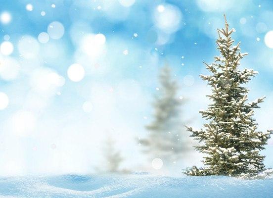 Pine Tree Winter