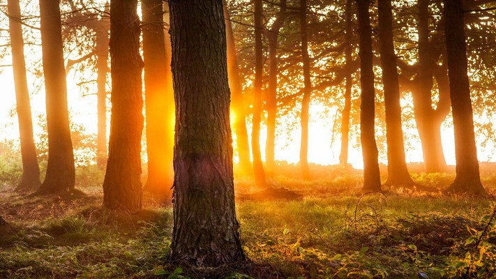 Sunset Behind Tree Trunk