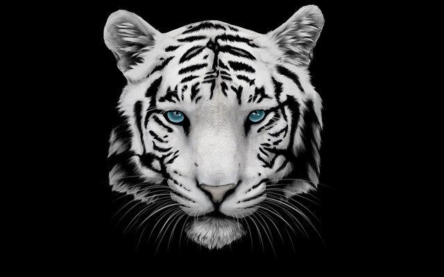White Tiger With Blue Eyes