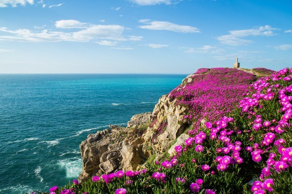 Bay Of Biscay Flowers