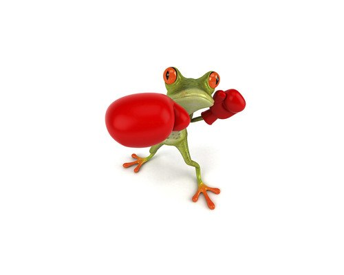 Funny Boxing Frog