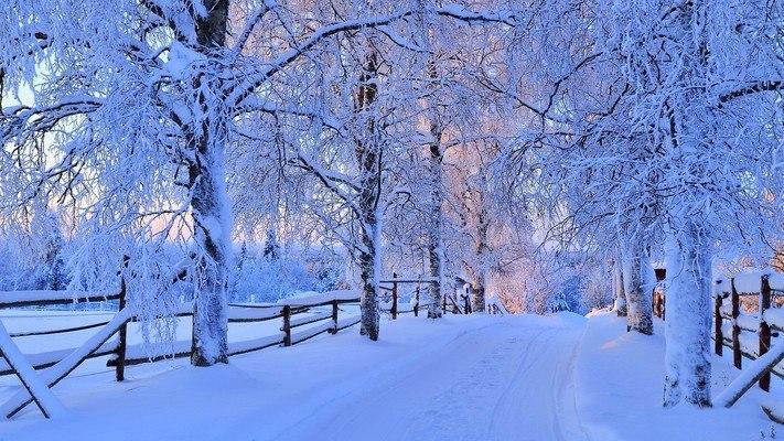 Beautiful Snowy Winter