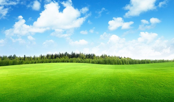 Smooth Grass