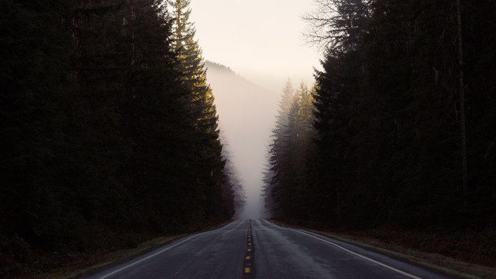 Forest Road At Dawn