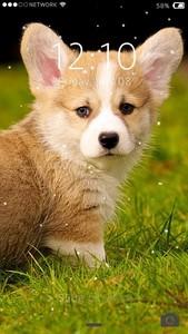 Cute Puppy Lock Screen